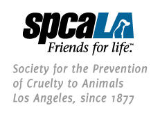 Society for the Prevention of Cruelty to Animals Los Angeles