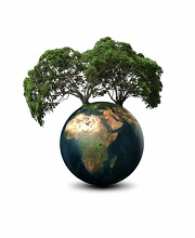 Plant trees save the planet