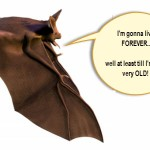 Do Bats Hold the Secret to Longevity?