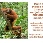 we can help forests for orangutans