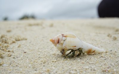 Manufactured Housing for the Hermit Crab