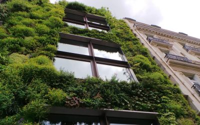 The Rise and Development of Eco Property in the Modern Age