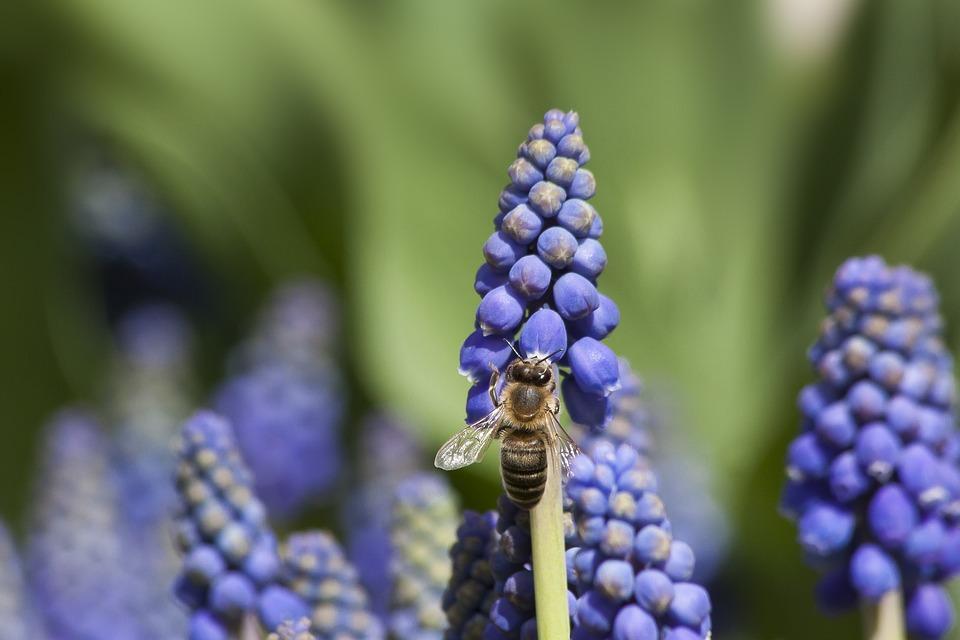 Introduction to Organic Gardening