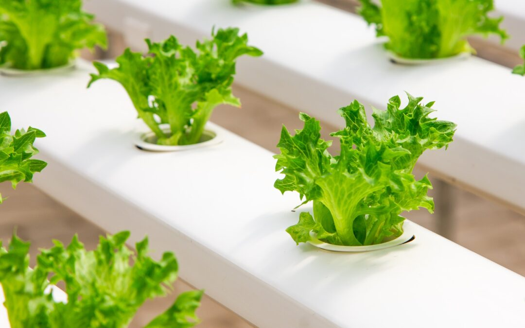 Hydroponic Growing Systems Are They Right For You