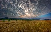 corn growing in fields for bioethanol