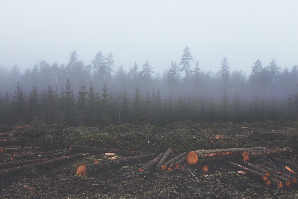 Deforestation and Damaging Effects
